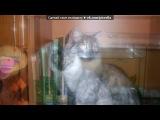 «шустрик» под музыку Светлана Копылова - Про КОТА. Не обижайте кошек и котов. Picrolla